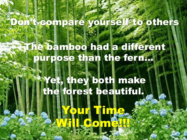 the-bamboo-nice-story-15-638